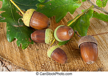 Acorns on Tree Stump - A group of acorns on a tree stump in...