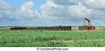 sugarcane harvesting scenery at the Dominican Republic, a...