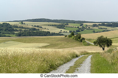 rural panoramic scenery with farm track