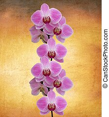 Perfect orchid - Beautiful orchid on a vintage sunset