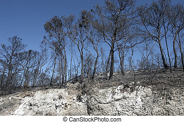 burned forest and scarp in southern Italy at a bright summer...