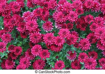Beautiful Red Purple Flora