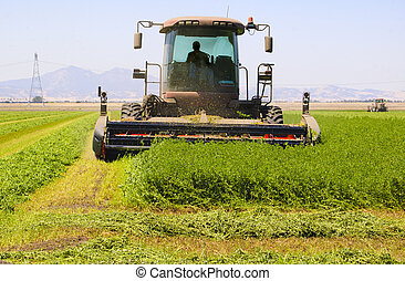 Combine harvester cutting a field of alfalfa