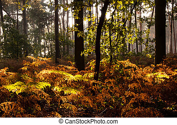 Autumn colors in a forest in Belgium