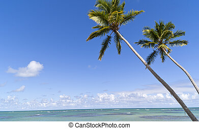 Blue paradise on caribbean island in sunny day. Two Palmtrees on the tropical beach over the sea