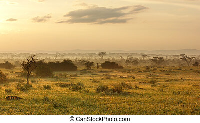 Queen Elizabeth National Park at evening time - sunny...