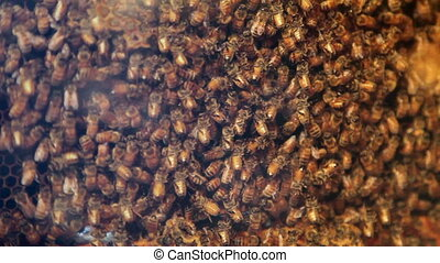 Bee hive closeup