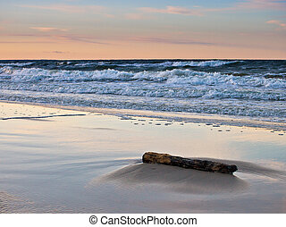 Drift wood on shore of the Baltic Sea