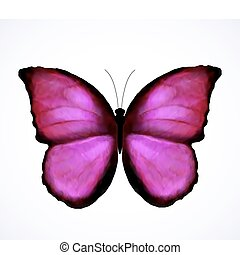 Bright Pink Butterfly Isolated. Vector