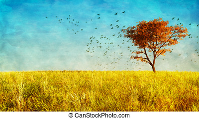Maple Tree in Meadow - Maple tree standing alone in a golden...