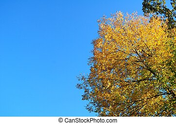 Blue Sky and the Colors of Fall