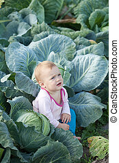 Baby in cabbage plant - Baby sitting in cabbage plant