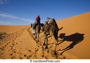 Dunes in Moroccan Sahara - Sand Desert with Dunes in...