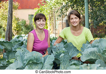 women  in plant of cabbage - Two women  in plant of cabbage