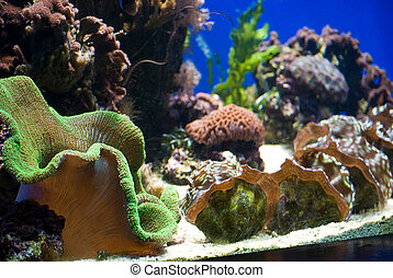 aquarium with fish and corals - aquarium with colorful...