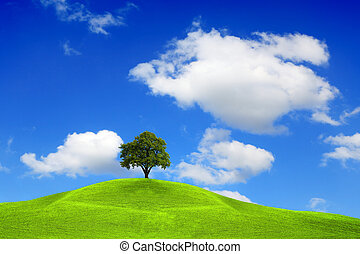Tree on the top