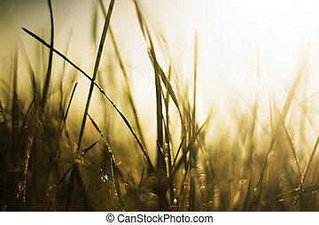 Grass in the sun - Image of grass wit sunset on background