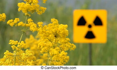 radiation 5 - Field of a yellow grass.Radioactivity Sign.