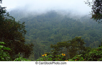 Bwindi Impenetrable Forest in Uganda - foggy detail of the...