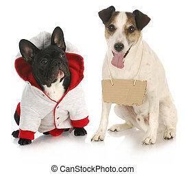 animal communicationq - communication - french bulldog...