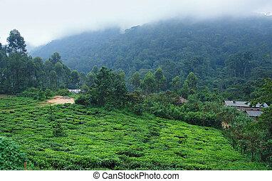around Bwindi Impenetrable Forest in Uganda - foggy scenery...