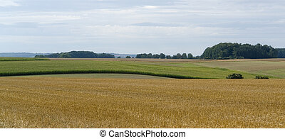 rural pictorial agriculture scenery at summer time - idyllic...