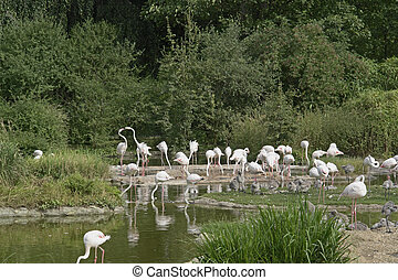 Flamingoes in sunny waterside ambiance