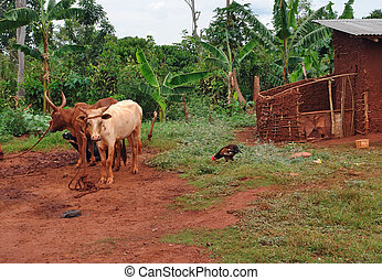 cattle in Uganda - jungle scenery with some some cattle in...