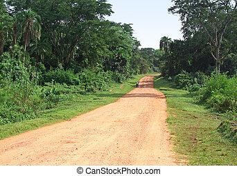 jungle road in Africa
