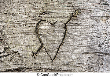 Carved heart - Heart carved in the bark of a tree