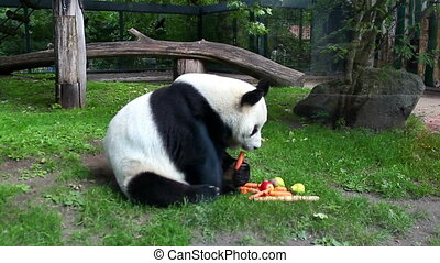 Panda in Captivity 2