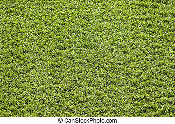 Synthetic grass - Grass background, synthetic court for...