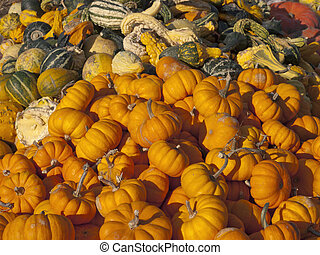 Pile of pumpkins - pumpkins and gourds piled high at a...