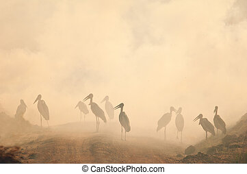 Marabou stork in the smog. Fire in savanna