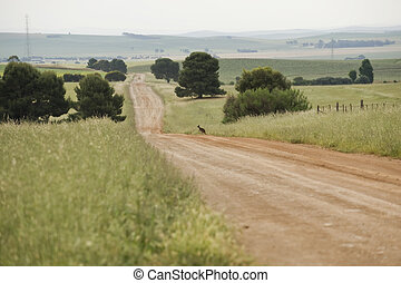 Rural Scene - Dirt road just outsideof Jamestown, South...