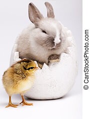 Happy Easter animal - Rabbit on chick