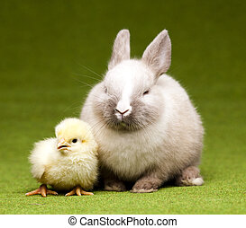 Easter frame - Chick and bunny