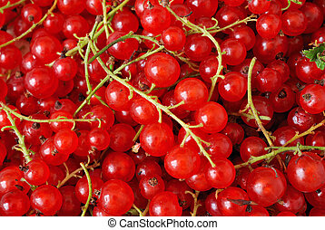 background of red berries - background of red currant...