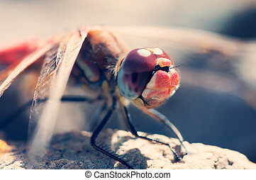 Dragonfly close-up portrait