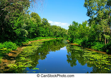 River and green trees with reflection in water. Summer...