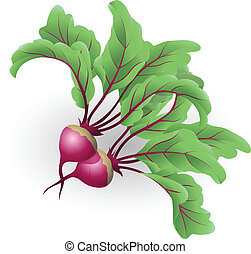 Beetroot illustration - An illustration of two beetroot aka...