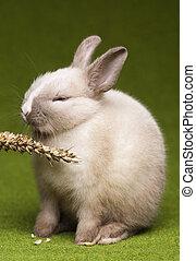 Bunny - Cute baby bunny