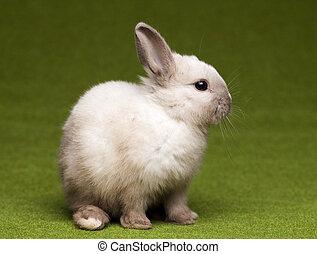 Curious Bunny - Cute baby bunny