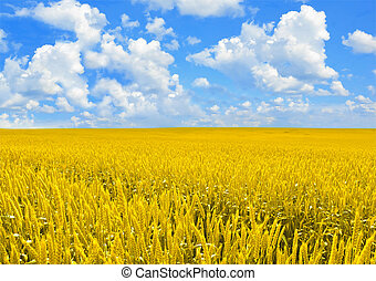 Field of golden wheat and perfect cloud blue sky