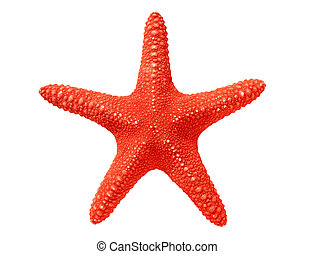 big red seastar isolated on white background
