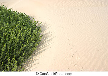 drying up - Plant getting covered up with shifting sand...