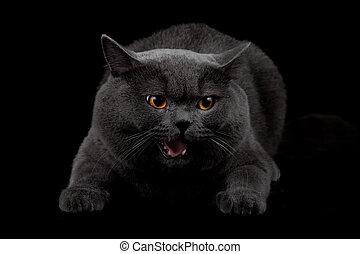 agressivo, pretas, gato, escuro, sala