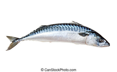 mackerel - Single fresh mackerel fish Isolated over white...