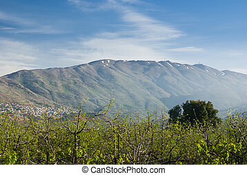 mount hermon in the northern Golan Hieghts - israel