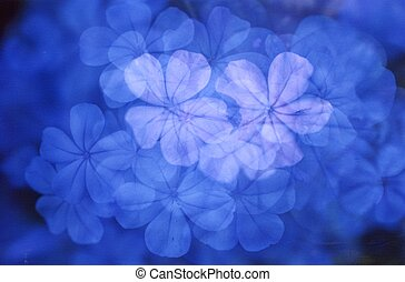 Blue Flowers - Multiple exposure design made from blue...